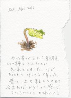 asagao521.jpg
