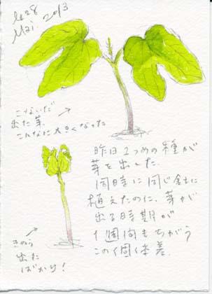 asagao528.jpg