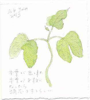 asagao64.jpg