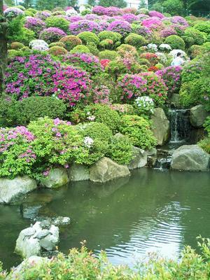 根津神社のつつじ祭り その2