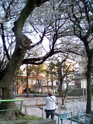 桜舞い散る公園にて